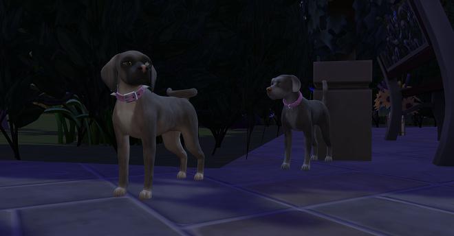 puppy425